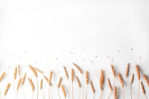 明るい背景上の行の小麦とライ麦の乾燥耳穀物小穂