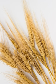 Wheat and barley on a white surface