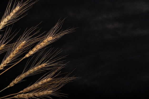 Wheat on the black background and texture