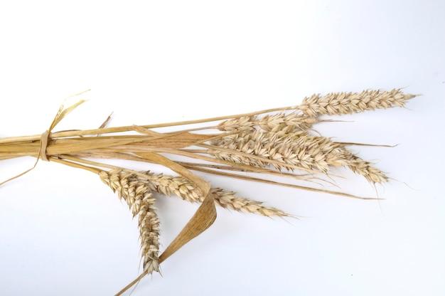 Букет пшеницы на белом фоне