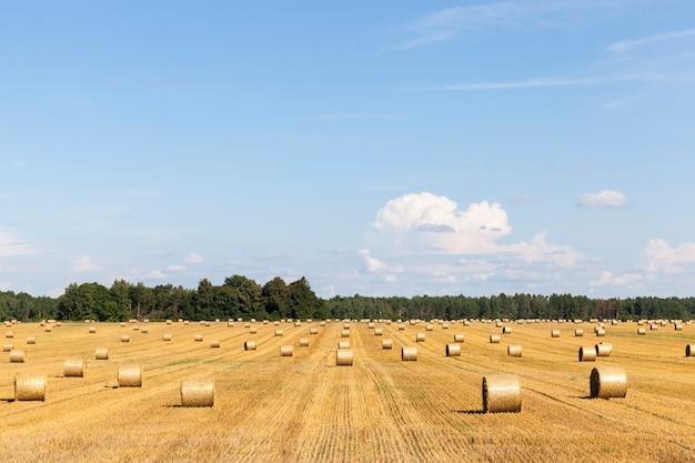 乾燥した黄金の麦わらの俵、夏の風景晴れた晴天のフィールド上の小麦の毛