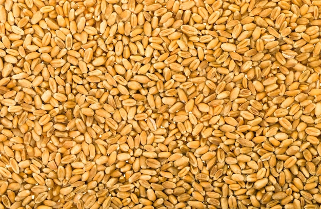 Wheat close-up texture background