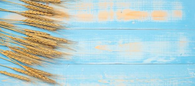 Wheat ears grain on blue wooden background.