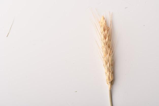 白い背景で隔離の小麦の穂