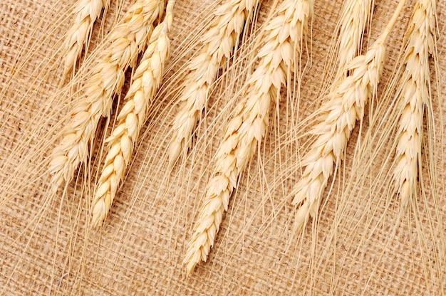 Колосья пшеницы на текстильном полотне