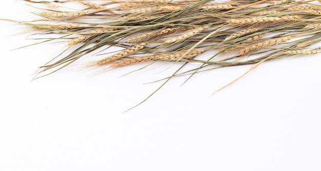 Wheat ears and wheat grains setup  on white wooden background. top view and copy space.
