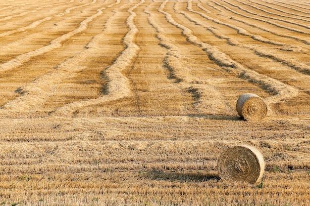 収穫後の麦畑収穫後も麦わらに残った農地