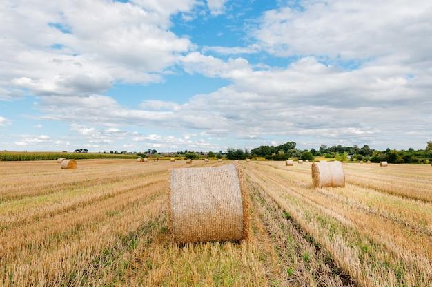 해질녘 짚 뭉치를 가진 수확 후 밀밭