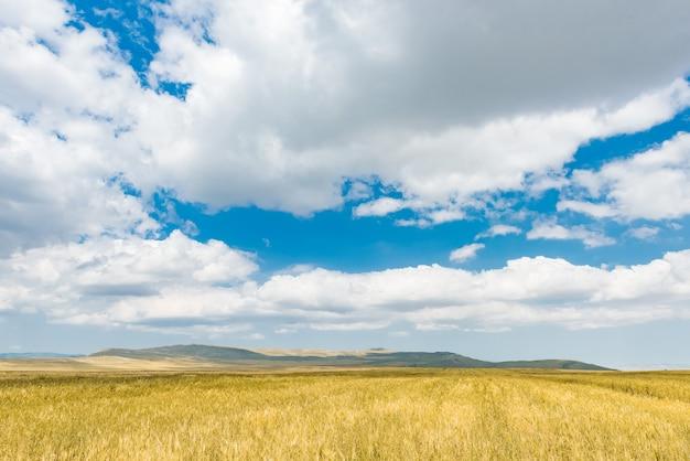 밀밭과 구름과 푸른 하늘