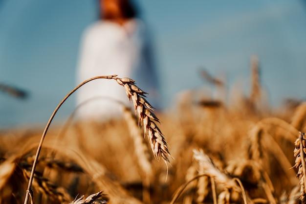 Пшеничное поле. сосредоточьтесь на зрелом ухе. женщина в белой рубашке на размытом фоне