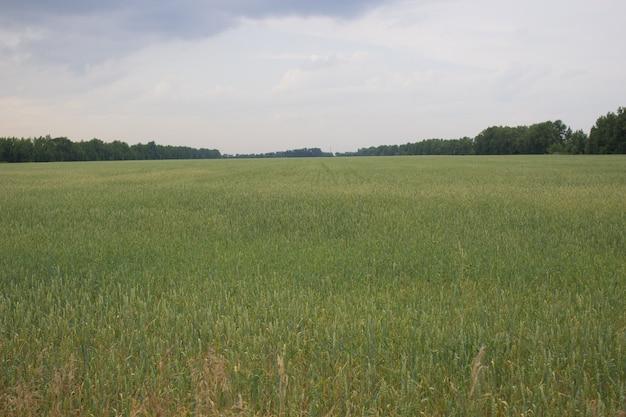 여름철 밀밭, 무한한 대초원 풍경