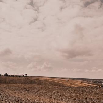 Поле пшеницы на больших широких холмах под светлым облачным небом.