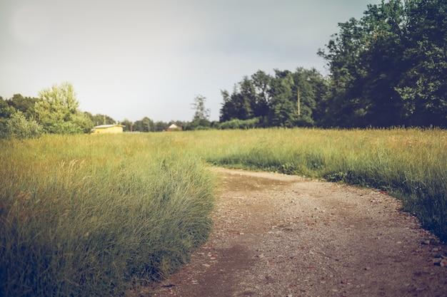 麦畑の夏の牧草地の風景と太陽の光。背景がぼやけている