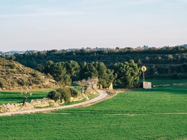 오두막 및 봄 밀밭