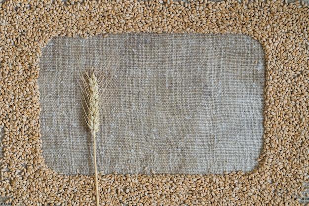 黄麻布のフレームの形の小麦粒。フレームには小麦の穂があります