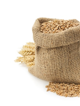 Wheat grain isolated on white