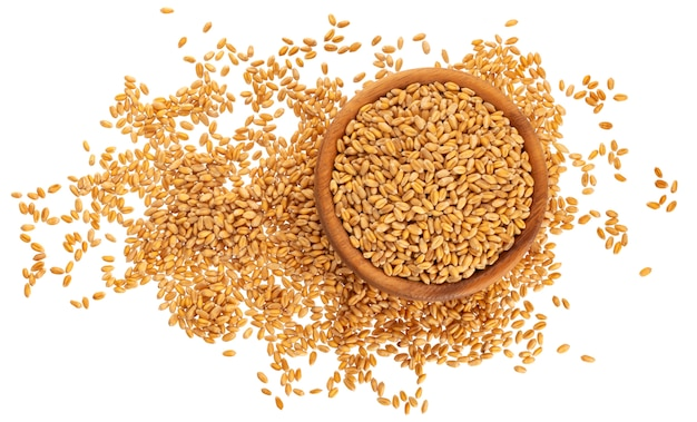Wheat grains isolated on white , top view