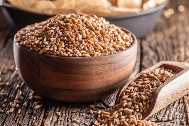 Wheat grains-the main ingredient of the bread filled in wooden bowl and wooden rustic scoop. bakend crusty bread in the backround.