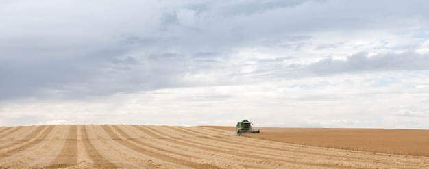 A wheat harvesting equipment is at work in the field.combine harvesting agriculture equipment harvester for golden ripe wheat. agriculture