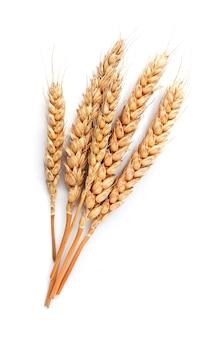 Пшеница, изолированные на белом фоне крупным планом