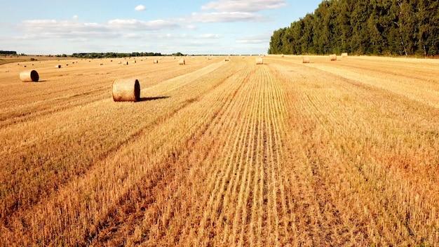 스택이 있는 밀 깎기 필드