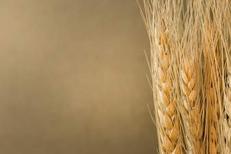 Wheat on wood  image background