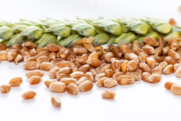 Пшеничное или ржаное зерно, из которого выпекается хлеб и другие хлебобулочные изделия.