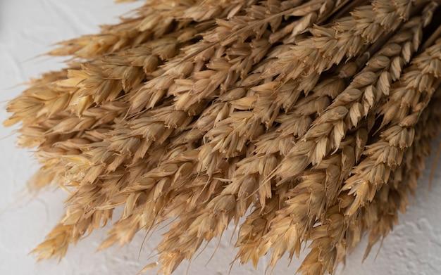 밀 호밀 보리 귀리 씨앗 전체 보리 수확 밀 콩나물 밀 곡물 이삭 또는 호밀 이삭 식물