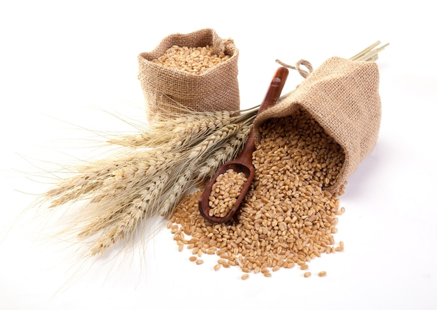 Wheat in sackcloth bags on the white background.