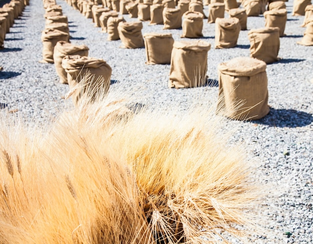 Мешки пшеницы в солнечный день в теплое летнее время