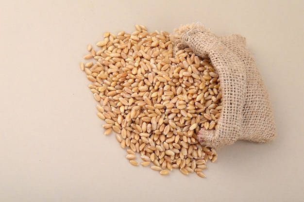 Wheat in small sack on background, close up.