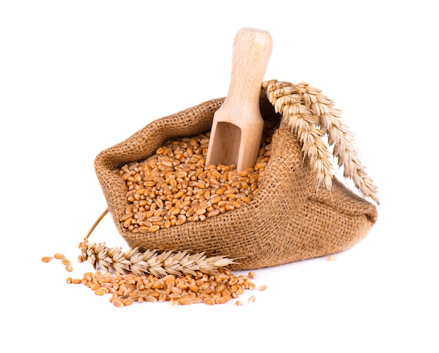 Wheat spike and wheat grain in burlap bag isolated