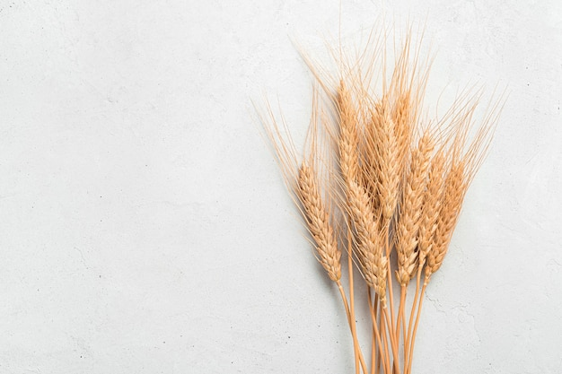 Wheat spikelets closeup on a gray background