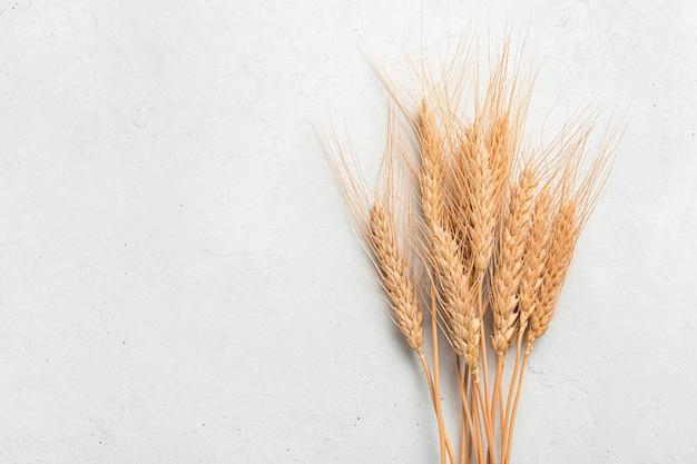 灰色の背景に小麦の小穂のクローズアップ