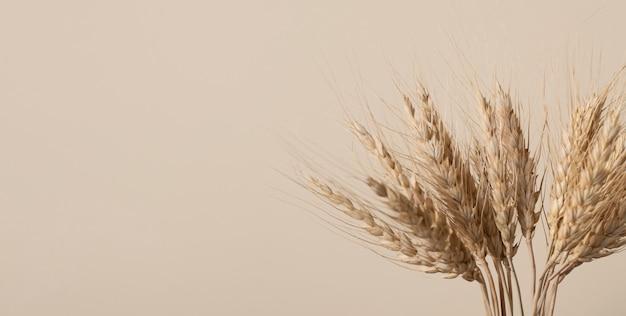 Колоски пшеницы на бежевом фоне с копией пространства. выборочный фокус.