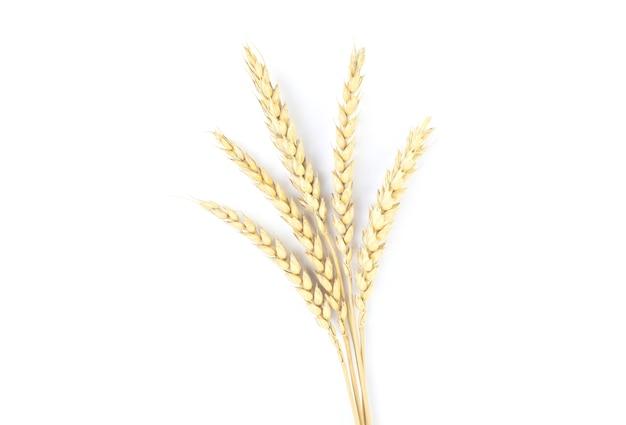 Колоски пшеницы на белом фоне