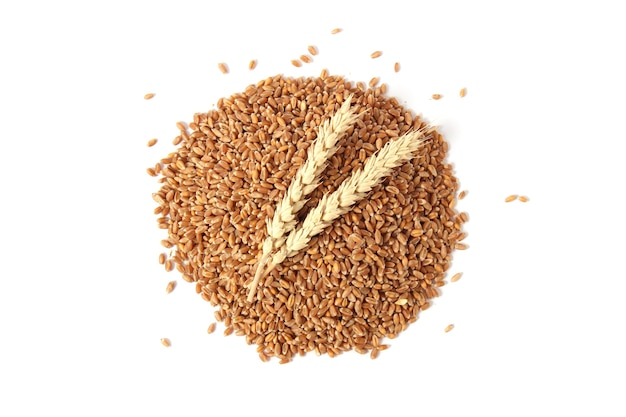 Wheat and spikelets on a white background