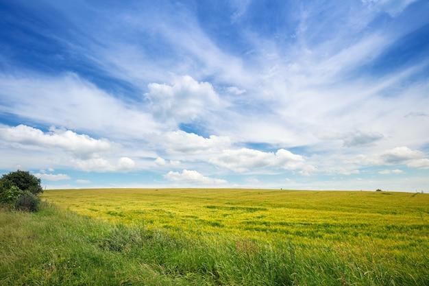 아름 다운 흐린 하늘과 Wheatfield 프리미엄 사진