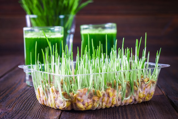Wheatgrass shot. juice from wheat grass. trend of health.