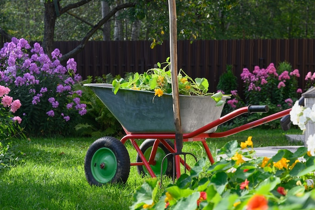 民間の農家で手入れの行き届いたフロックスの花が咲く緑の芝生に腐植土と堆肥でいっぱいの手押し車。季節のガーデニング。屋外。