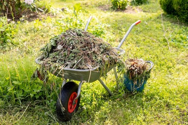 Тачка в огороде. тележка с ветками. уборка в саду. автомобиль полностью загружен старыми растениями, уборка в парке.