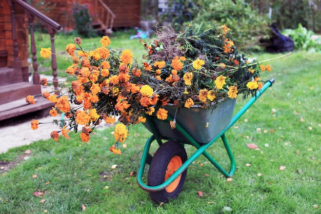 Wheelbarrow with flowers stands in the garden