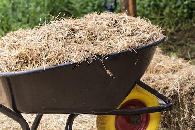 Wheelbarrow with fresh hay