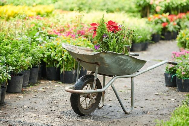 Тачка с различными растениями и цветами в питомнике растений или садовом центре