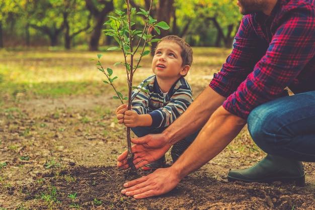 언제 자랄까요? 정원에서 함께 일하는 동안 아버지가 나무를 심는 것을 돕는 호기심 많은 소년