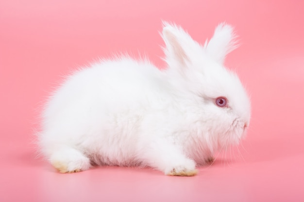 White adorable baby rabbit on pink background. cute baby rabbit.