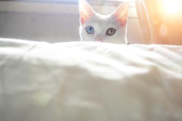 흰색 사랑스러운 고양이 새끼 고양이