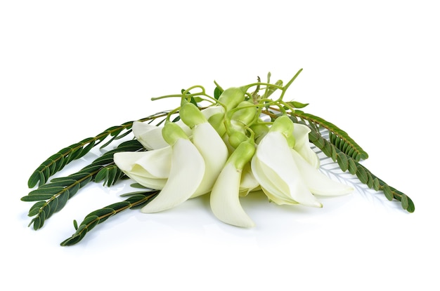 Белая агаста, тайский овощ на белом