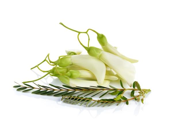 White agasta ,thai vegetable on white
