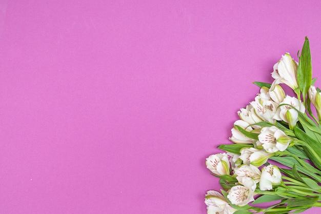 Белые цветки альстромерии на фиолетовом, розовом фоне.